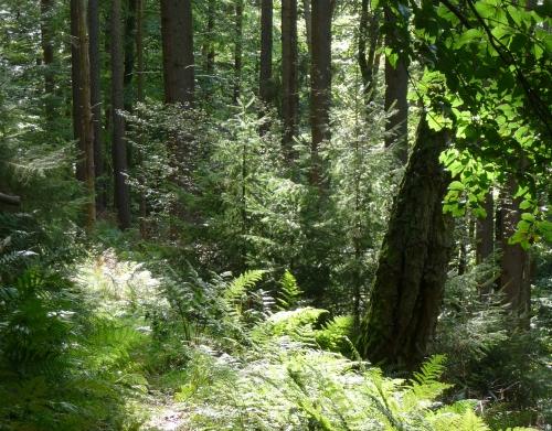 Kommt der nächste Bischof aus dem Wald? Foto: Georg Magirius
