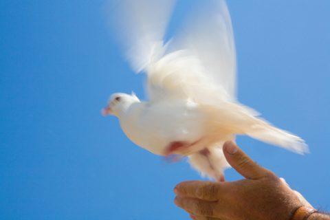 Die Taube ist Symbol des Heiligen Geistes. Foto: Colourbox